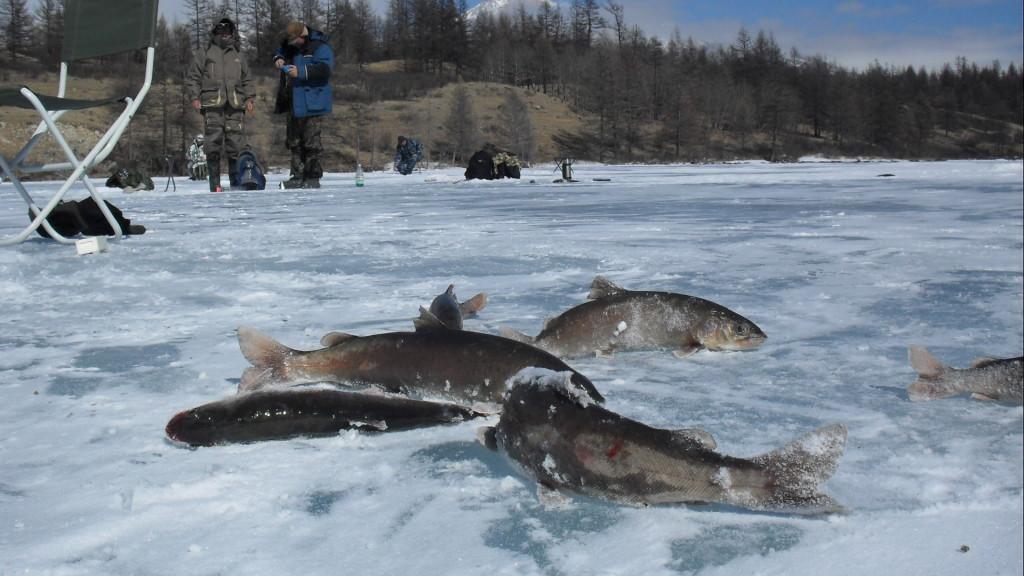 По льду Хубсугула
